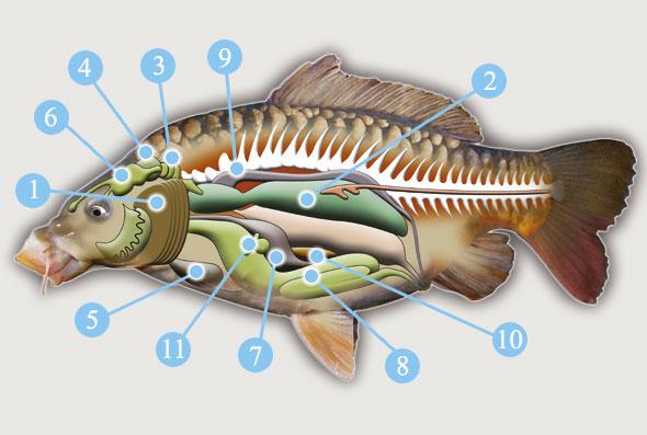 прикормка для рыбы использование