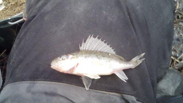 прогноз клева рыбы в оржице