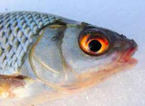 форум рыбаков мелитополя