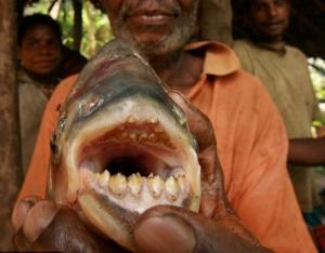 ryba-potroshitel