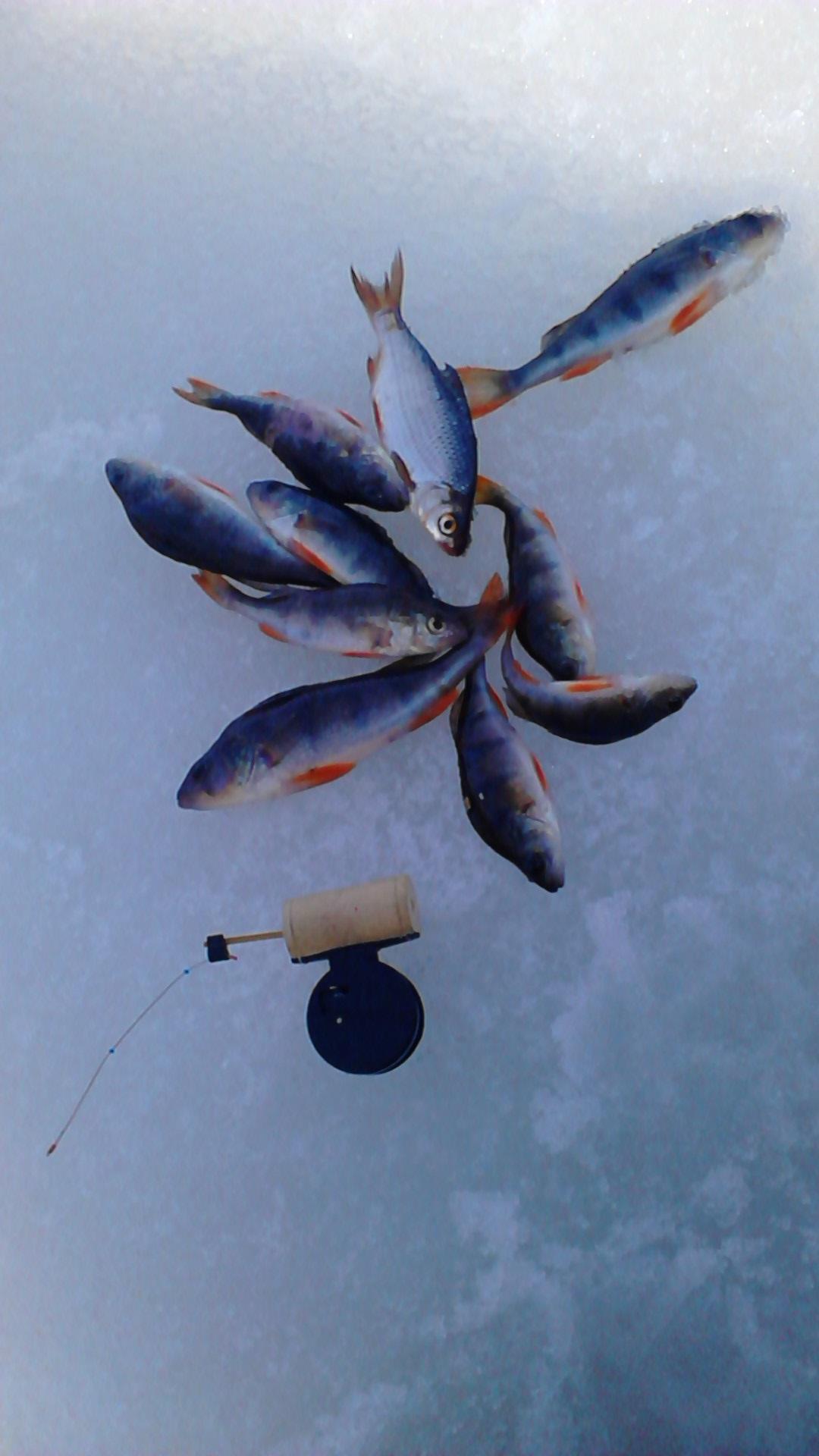 как ловить рыбу на экран видео