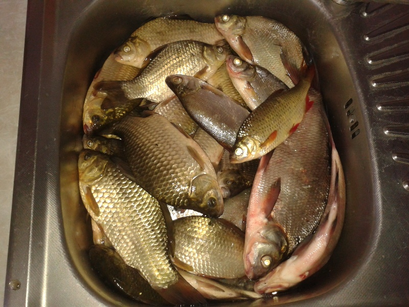 отчеты о рыбалке на воблу