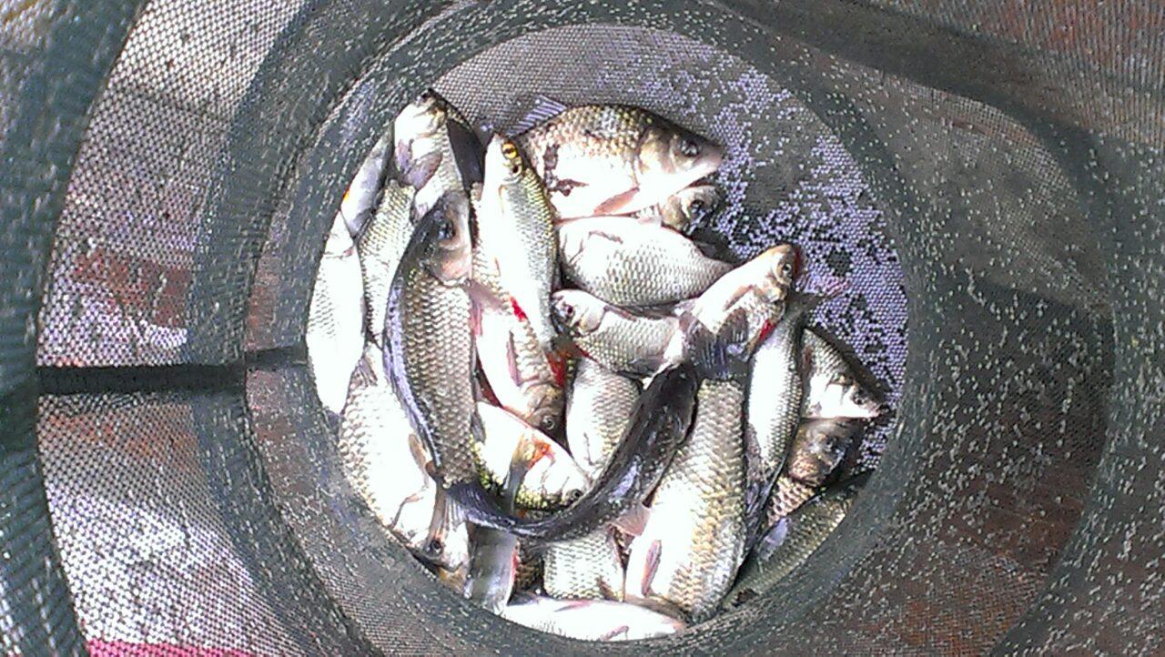 Клев рыбы в ишимбае